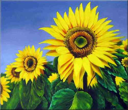 Schilderij Sunflower Fields 50 x 60